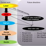 future of dentistry, stem cell regeneration